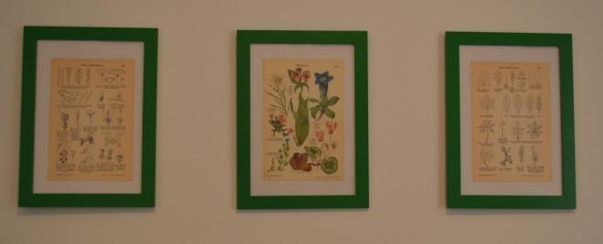 roślinne grafiki w zielonych ramkach