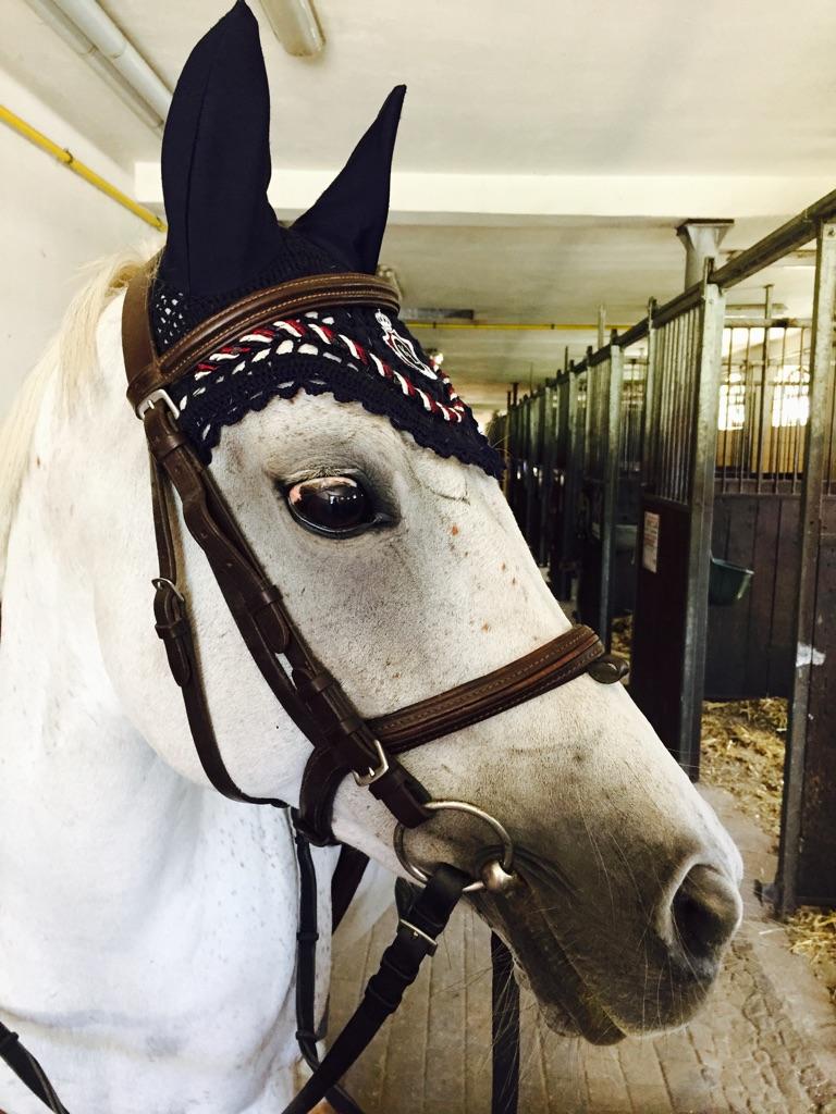 nauszniki dla konia