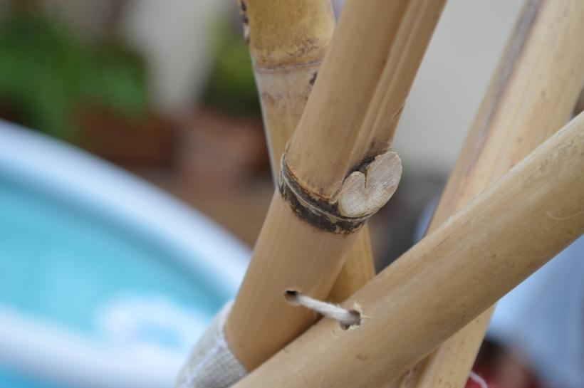 bambusy w tipi