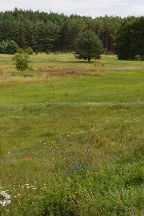 śródleśna łąka