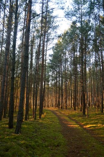 droga w lesie