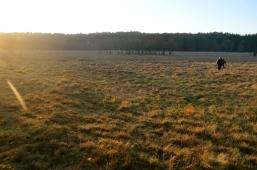 leśna łąka