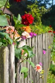 wiejskie kwiaty
